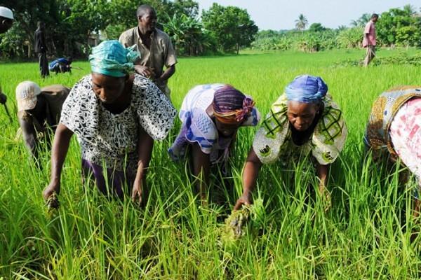 Atelier de sensibilisation et de formation sur la mutualité pour les acteurs du secteur agricole ivoirien - 03 au 04 Avril 2019 à Divo (Côte d'Ivoire)
