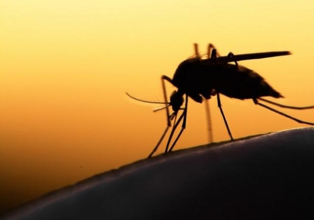 Togo: le traitement du paludisme grave désormais gratuit